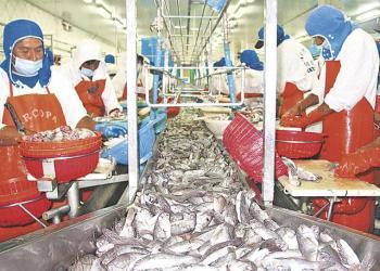 La pota y el perico son dos de las especies pesqueras más solicitadas por el mercado internacional.