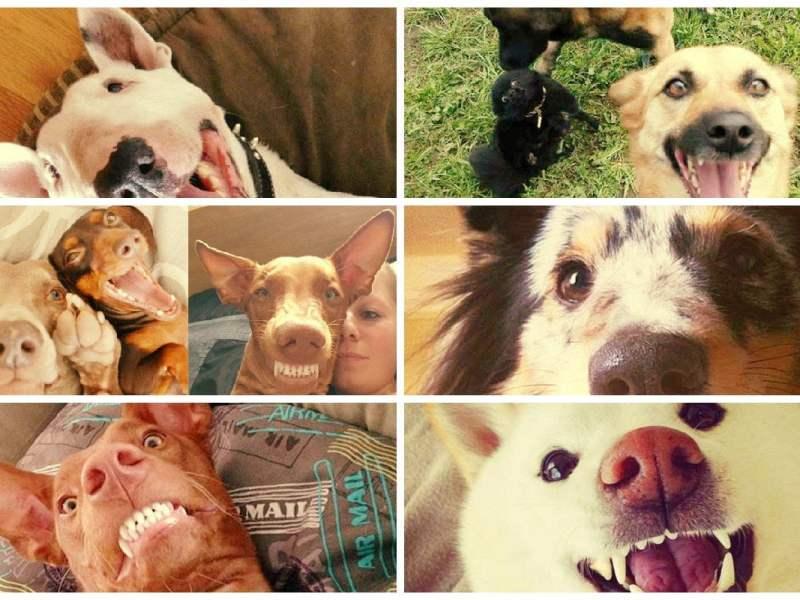 Selfies de perros que te robarán una sonrisa