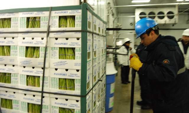 Los espárragos peruanos se consumirán próximamente en todo Brasil.