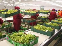 A pesar de las trabas impuestas por el gobierno ecuatorianos, los envíos de frutas y hortalizas a dicha nación han aumentado.