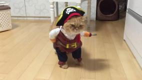 Facebook y un gatito pirata