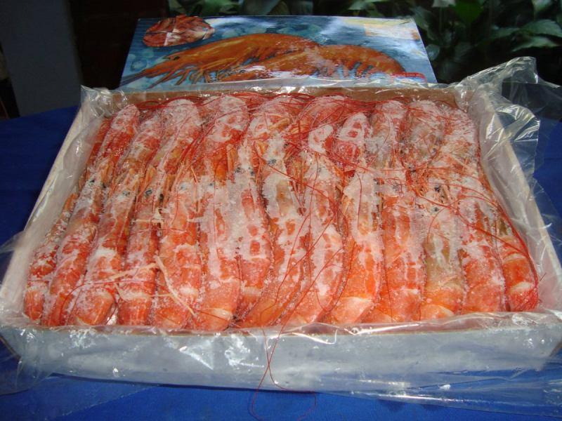 Los langostinos son la principal especie acuícola peruana exportada.