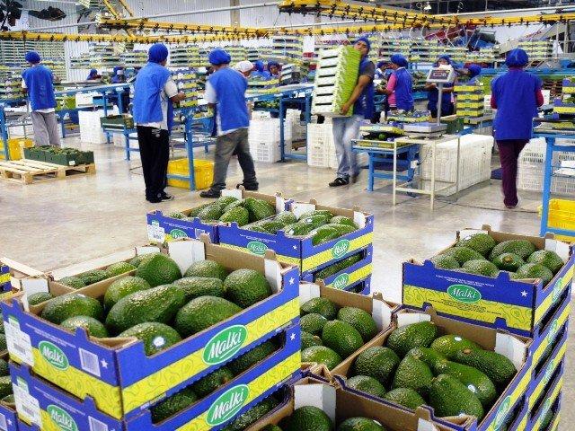Los productos agrarios nacionales se direccionaron hacia 140 destinos internacionales.