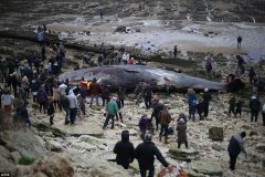 Impactantes fotos de tres ballenas muertas en Inglaterra