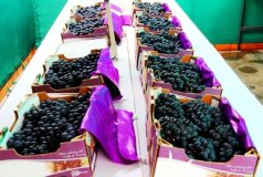 Empresas de La Libertad exportaron frutas y alimentos con el apoyo de Sierra Exportadora.