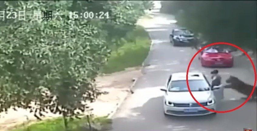 Un escalofríante video colgado en YouTube muestra el violento ataque de un tigre contra una mujer