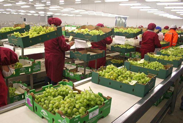 La oferta exportable agroperuana se diversificó en Panamá.