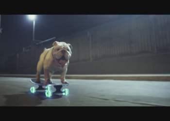 Facebook   Otto, el bulldog skater peruano, protagoniza una campaña en Suiza