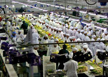 El rubro exportador agroindustrial fue el que más puestos laborales otorgó el año pasado.