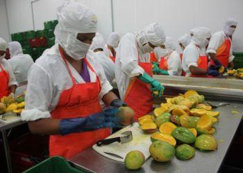 La oferta exportable de Lambayeque es liderada por el rubro agroindustrial.