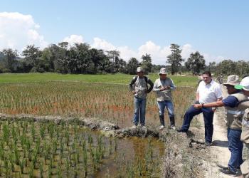 Viceministro Pablo Aranibar: las agroexportaciones podrán superar los 8,000 millones de dólares en el 2019