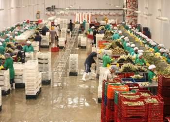 Adex: 3 millones de empleos genera el sector exportador en el Perú