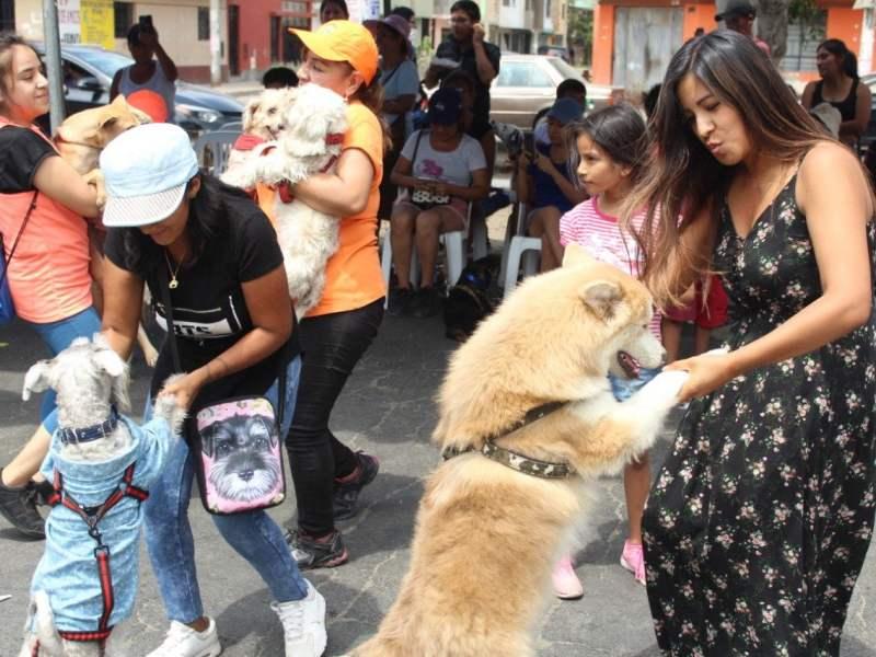 Más de 400 mascotas realizaron carrera canina en Comas
