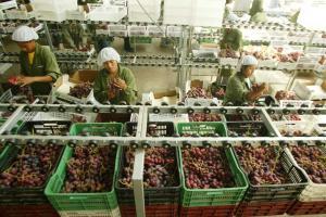 Adex: Exportaciones regionales caen -9.8% en primer trimestre del 2020
