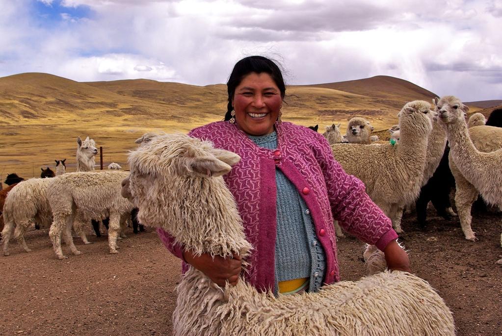 Productora de alpaca