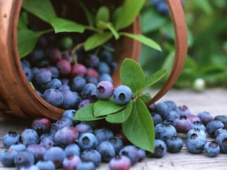 Exportación de uvas, Adex
