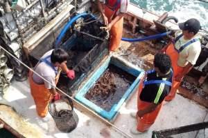Adex: Despachos de pesca para Consumo Humano Directo registran caída el 2020