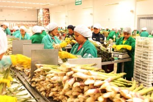 Adex estima que más de 2800 empresas dejaron de exportar el 2020