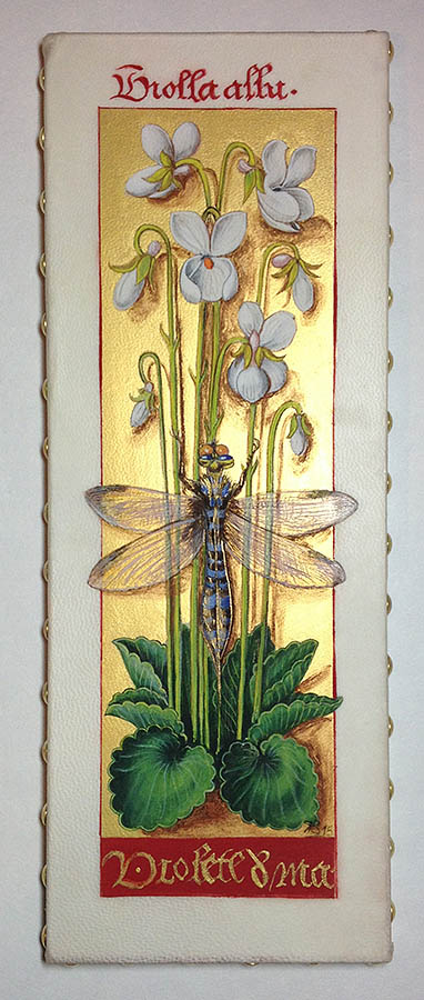 Violette blanche. Reproduction d'une enluminure des Grandes heures d'Anne de Bretagne.