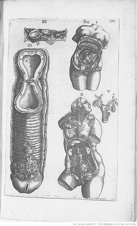 Illustration n°1 : Les organes génitaux de la femme vus par le docteur André Du Laurens.