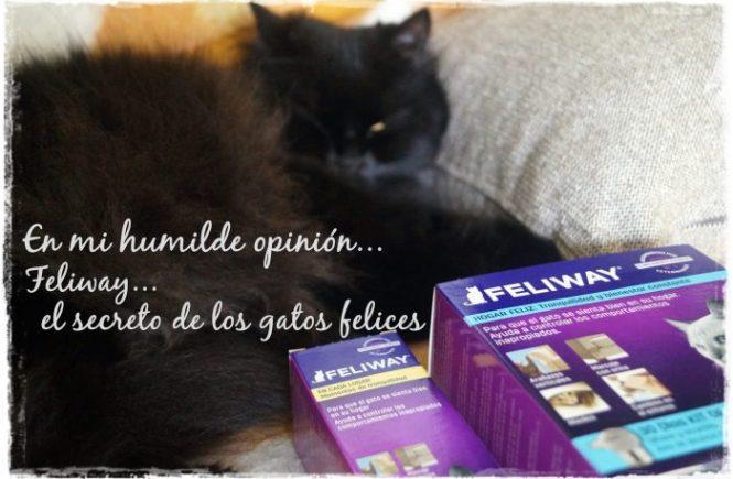 Feliway, El secreto de los gatos felices