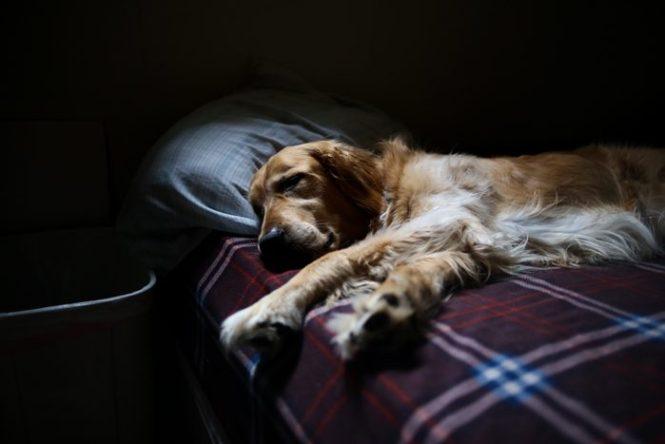 Dormir en colchón viscoelástico