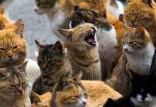 Photo of 110 قطط طُرِدت من شقة.. ومسعى عاجل لإيوائها