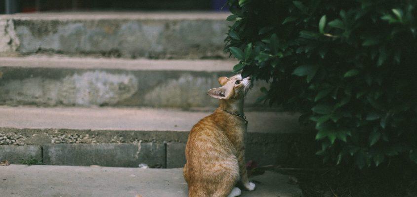 cat and its senses - sensory overload as an autistic adult