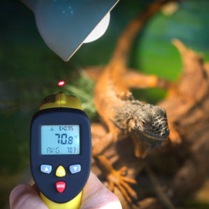Maintaining healthy reptiles means monitoring temperatures of the enclsoure.