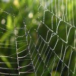 蜘蛛の巣って凍るんだ・・・