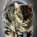 帰宅したネコさん、すごい厳しいセキュリティに引っかかるww