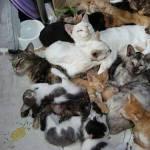 多分猫です…