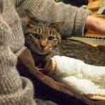 猫ってなんで作業してるど真ん中で寝るんだろう😭