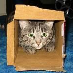 いつまでティッシュの箱に入れるかな~?