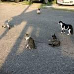 猫の集会をぶちこわすワンコwwwww