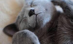 猫がこの寝方し始めると、夏だな…って思う