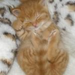 IKEAの猫ベッドをたくさん買ったら「合宿」感がすごいwww