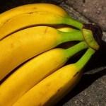 こいつ・・・バナナに擬態してやがるッ!🍌