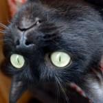 写真撮りながらクシャミした時の猫の顔wwwww