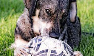 サッカーの公式試合に乱入した犬にインタビューしてみた結果ww