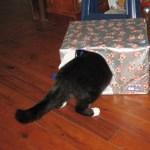うちの猫がいつの間にか「ヨッシーのたまご」になってたwww