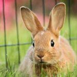 伊勢丹から届いたカタログのモデルがまさかのウサギ。恐ろしくモフいw