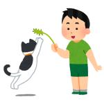扇風機と猫じゃらしを合体させたマシーンを作った結果……😂