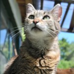 暑かったので猫まっしぐらな「アレ」を凍らせてみた結果…食いつきがエグい😹