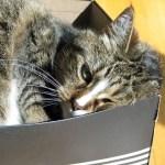 「このフィット感…」これ以上ないベストポジションを見つけてしまった猫さん😽