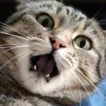 「猫は歯ブラシで撫でられるとたまらない」らしいので実際にやってみた結果…😅