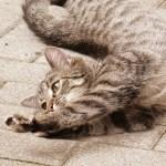母親から送られてきた実家の猫のダラケ具合が半端ないww