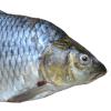 魚の鮮度偽装をしていたクウェートのスーパー。そのやり口が「目から鱗!」だと話題に😓