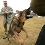 Twitterで他の犬がよくやってる「あご乗せ」を試してみた結果…w