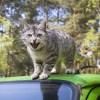 「車のエンジンルームが子猫に占領されている…」→想像以上の光景だったw